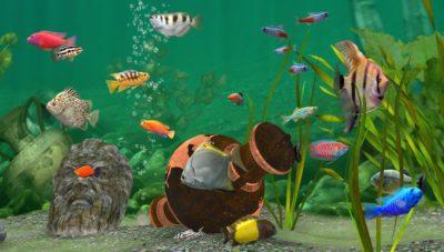 Fish farm 3 bitbros for Fish farm games